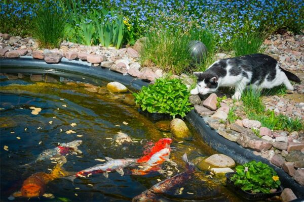Running Water But Preferably A Koi Pond